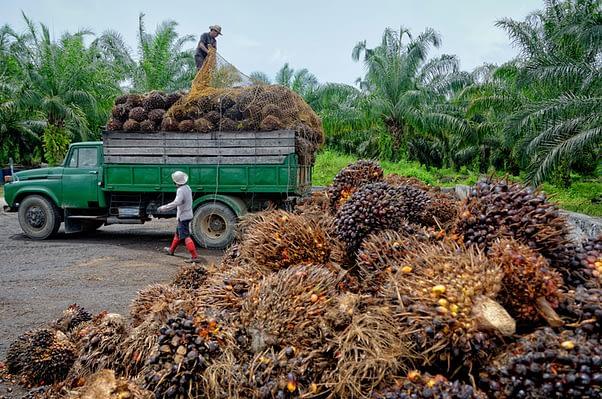 La stratégie anti-déforestation et l'huile de palme en Afrique | IRIS